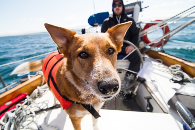 dog-sailing